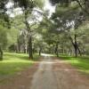 Porque debes visitar el parque Syngrou en Maroussi
